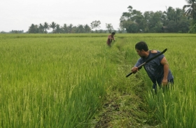 Duterte pessimistic about rice sufficiency target due to massive land conversion